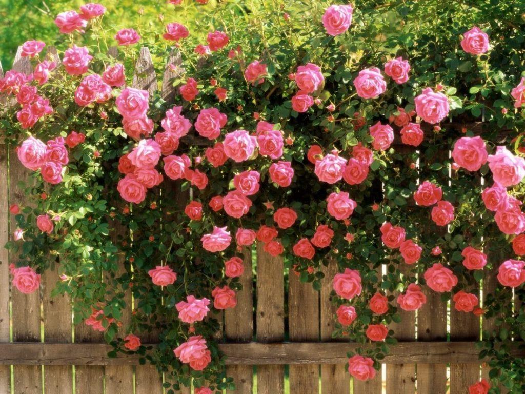 significado positivo del color rosado
