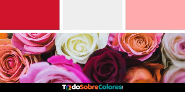 rosas por colores