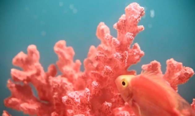significados color coral