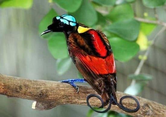 aves mas hermosas