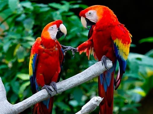 aves mas hermosas del mundo