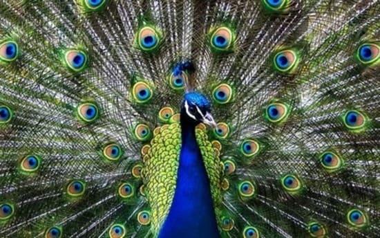 aves bellas
