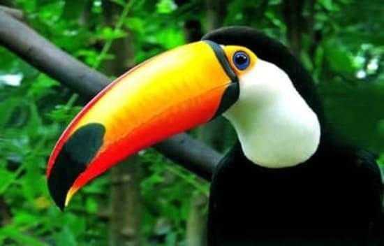 aves mas bellas del mundo
