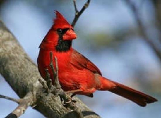 aves mas bellas