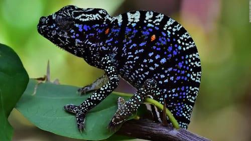 animales cambian de color