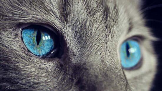 vision de los gatos
