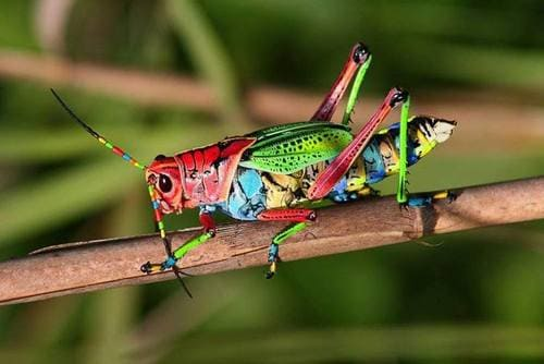 insectos mas coloridos